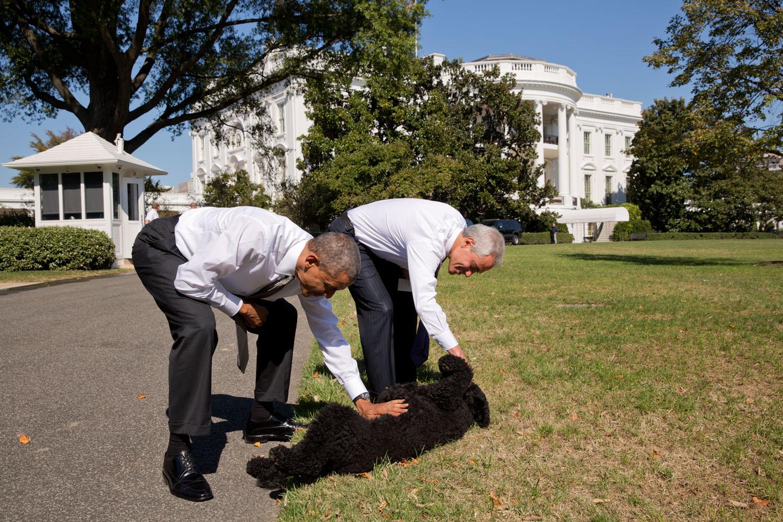 White house apron - White House Apron 83