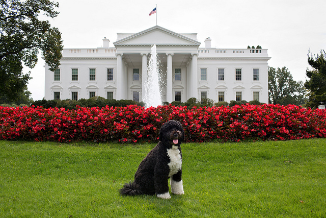 Bo poses for a photo on the North Lawn of the White House