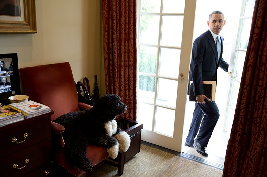 Bo was just hanging out in the Outer Oval Office