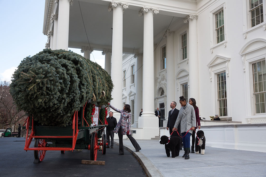 The First Lady Receives the Christmas Tree 2014