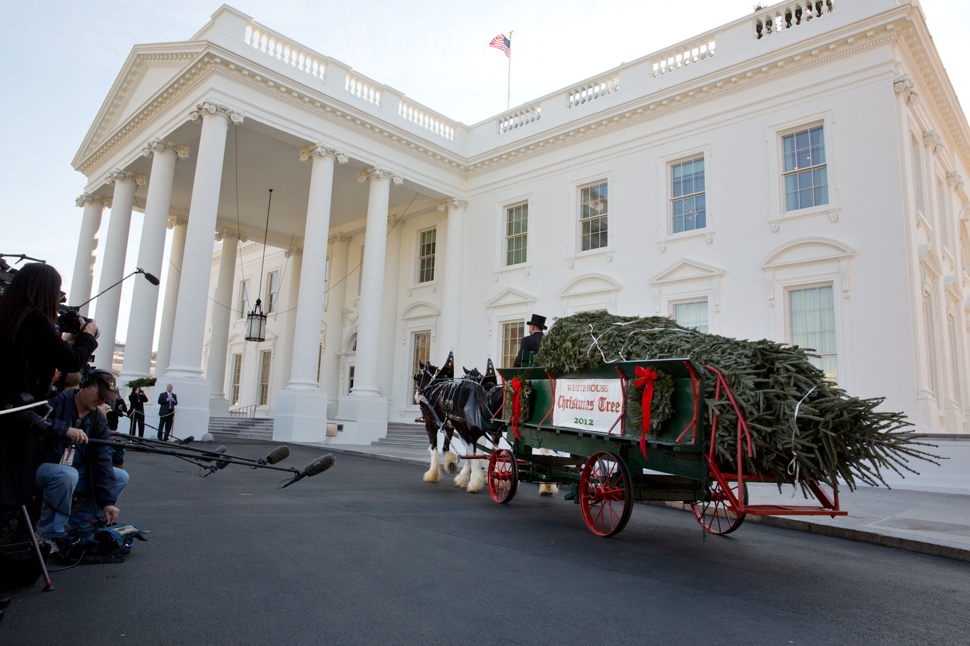 The official White House Christmas tree, a 19-foot Fraser fir, arrives in a horse-drawn carriage