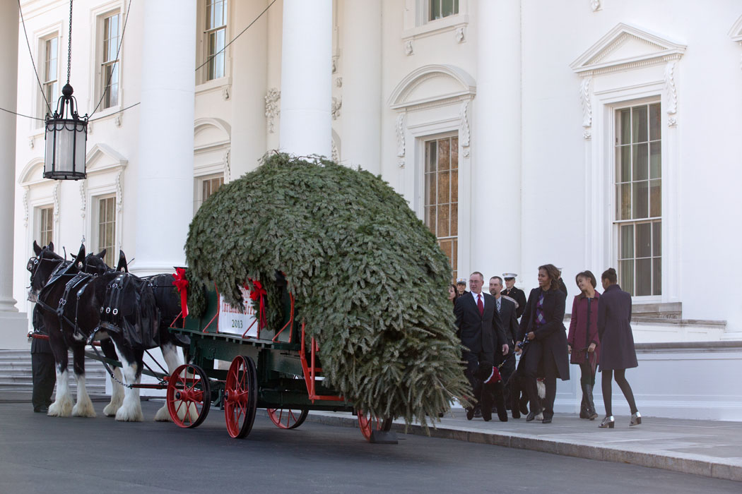 The Official 2013 White House Christmas Tree Arrives | whitehouse.gov