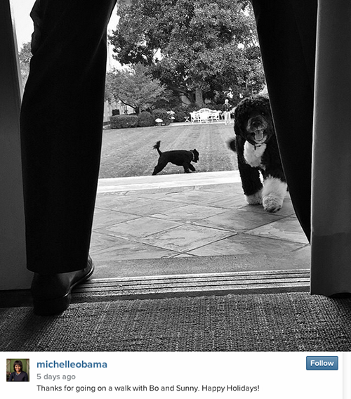 The First Dogs Take Over The First Lady's Instagram Account