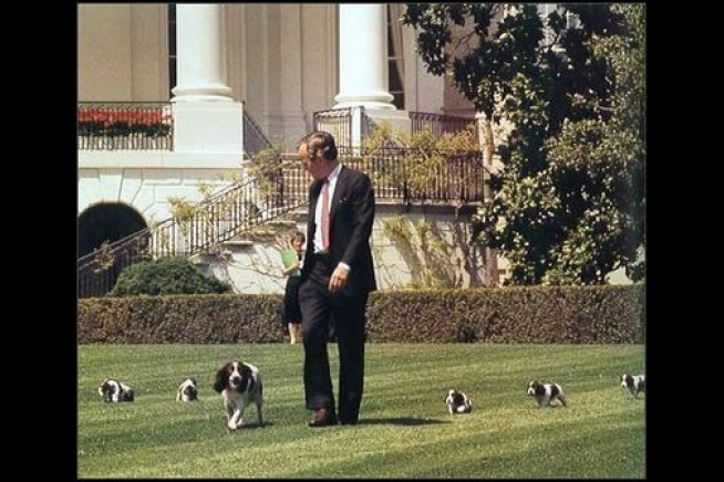 George H W Bush With Millie And Puppies The White House