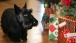 Christmas Pets: Barney 2005