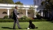 The President and Bo Play Fetch