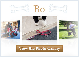 View the Bo Photo Gallery