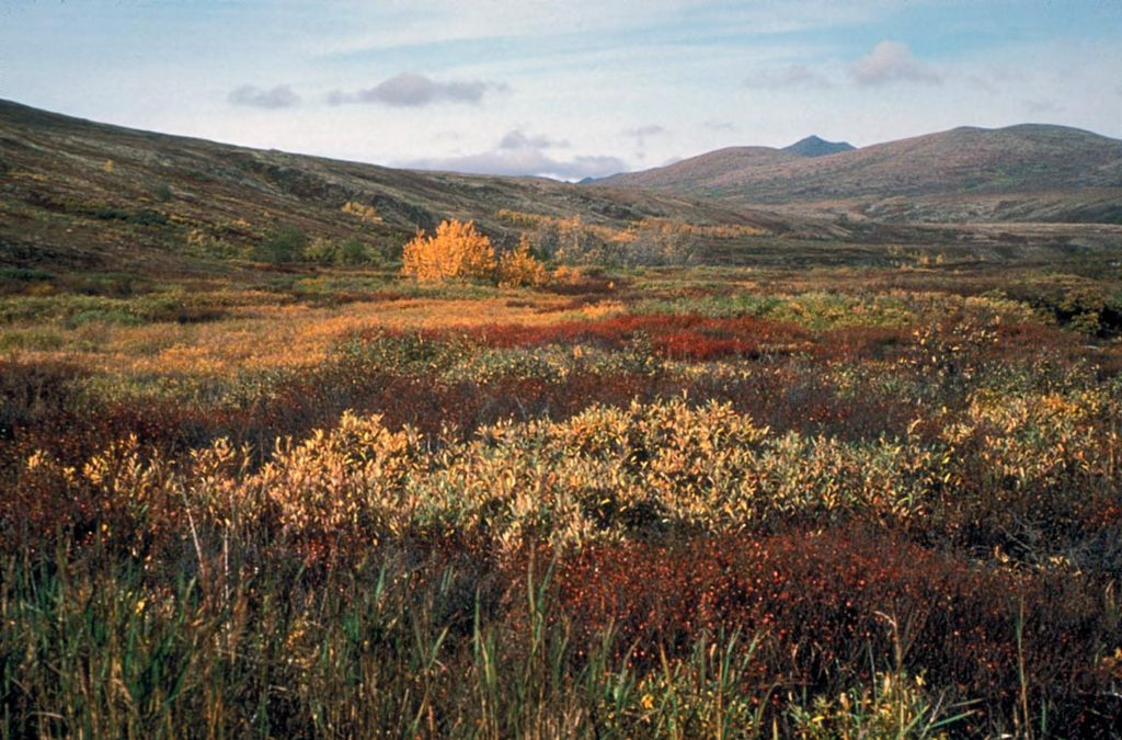 Autumn on the tundra of the Yukon Delta