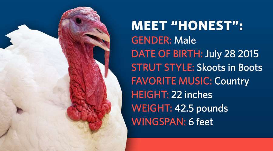 "Meet ""Honest"": Gender: Male, Date of Birth: July 28, 2015, Strut Style: Skoots in Boots, Favorite Music: Country, Height: 22 Inches, Weight: 42.5 Pounds, Wingspan: 6 Feet"